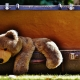 Poorly photoshopped-in Plush Bear hanging from Suitcase