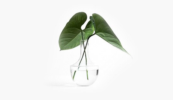 Trimmed Plant in Glass Vase